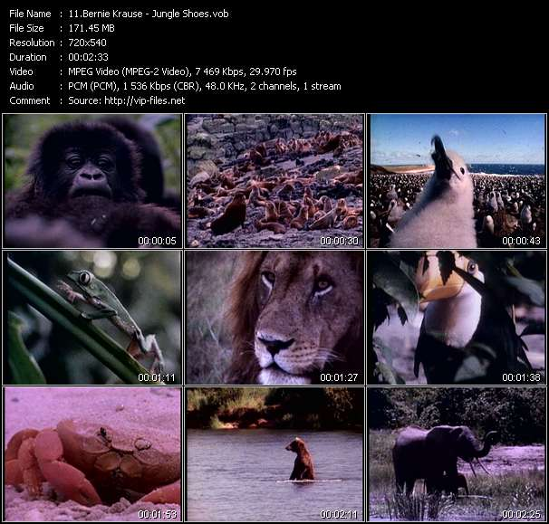 Bernie Krause - Jungle Shoes