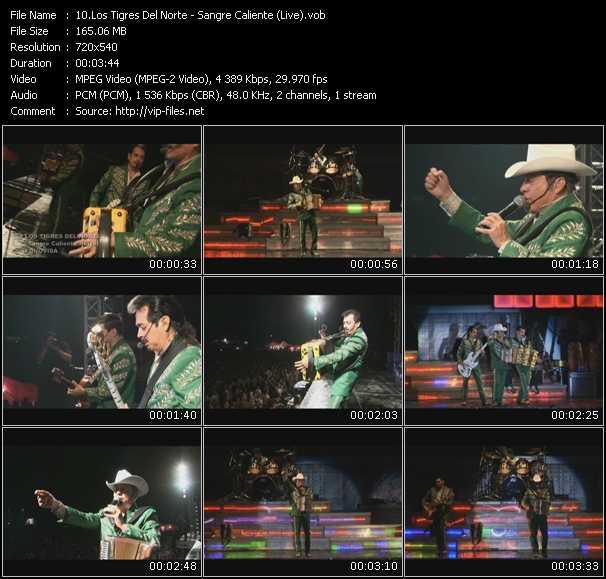 Los Tigres Del Norte - Sangre Caliente (Live)